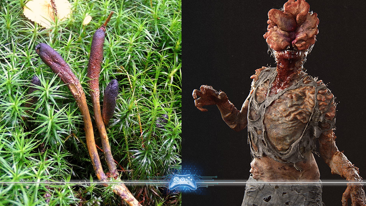 Fungo que contaminou os humanos de The Last of Us existe mesmo e ...
